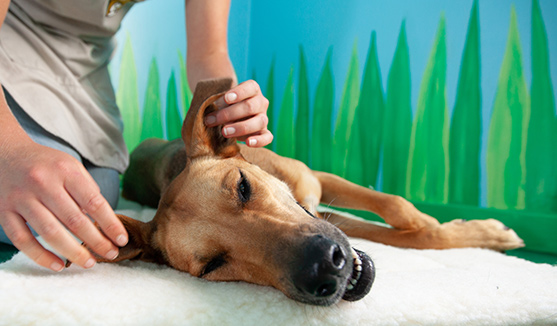 Refer Your Friends to Help <br>Homeless Pets</br>